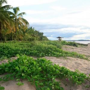 Frans Guyana